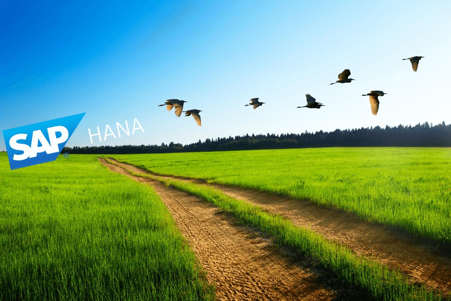 Best-Practices für die Überwachung der HANA-Migration
